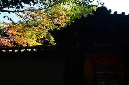 金地院の色付き