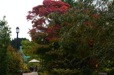 ガーデンミュージアム比叡の色付き