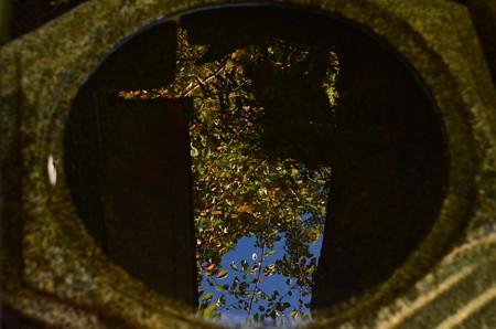 秋を映す~
