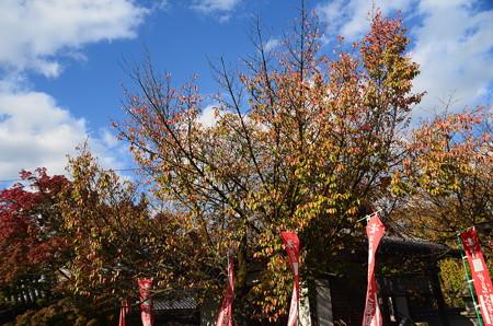 本満寺・妙見宮の桜紅葉