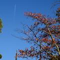 文殊塔と桜紅葉と飛行機雲