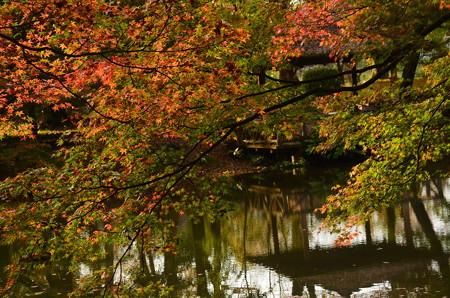 秋彩の燦めき