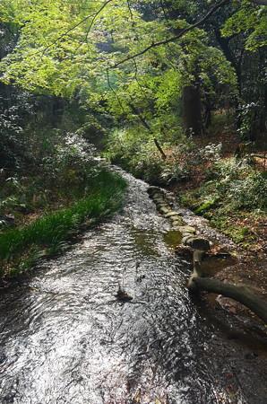 まだ緑の泉川