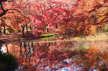 赤く染まる池