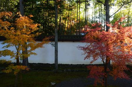 紅葉と白壁と竹林