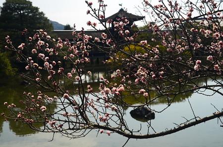 梅の向こうの泰平閣