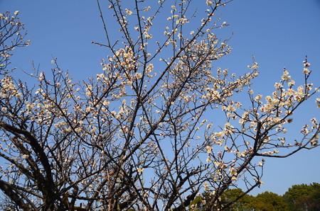 春の空に~