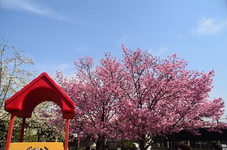 梅小路公園の陽光(ヨウコウ)