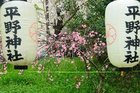 桜の園の花桃