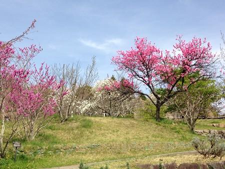 花桃の丘~