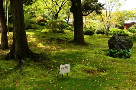 緑の平安の庭