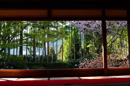 春景色の宝泉院庭園