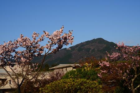 桜の中の比叡山