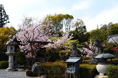 桜咲く五智山蓮華寺
