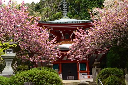多宝塔前の八重桜
