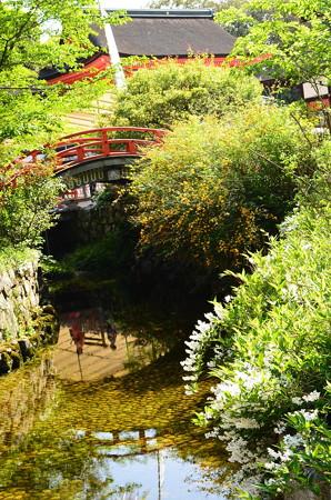 春の花咲く下鴨神社