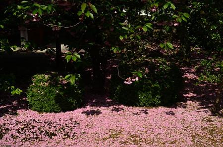 ピンクの地面~