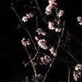 Photos: 参道の花