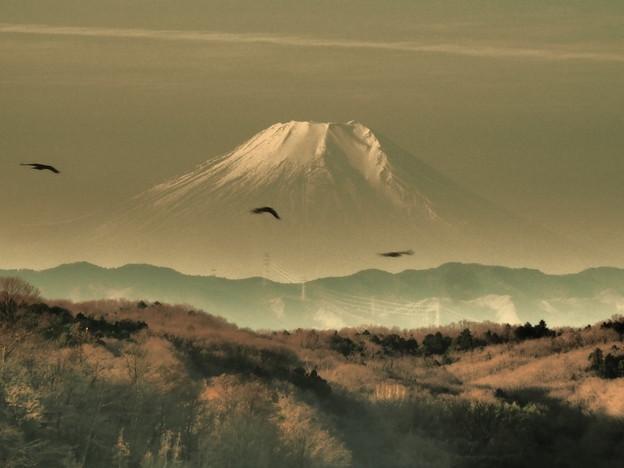 富士山麓の三羽烏