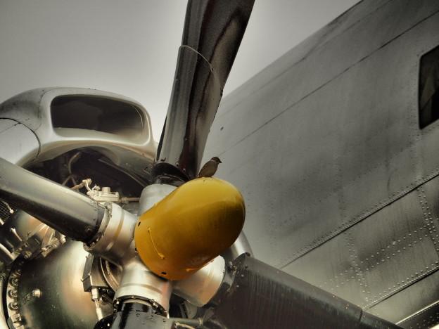 雀と飛行機