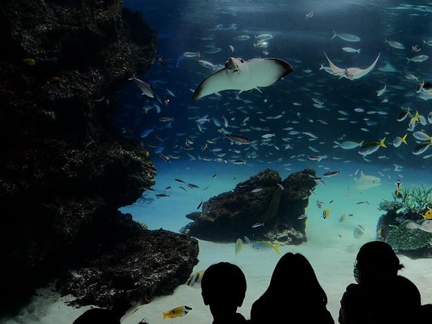 写真: 海底気分