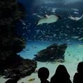 Photos: 海底気分