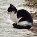 白黒猫ちゃん1_7594
