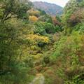 Photos: 湯河原の山中