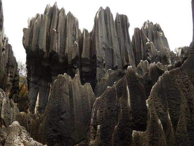 雲南省 世界遺産 石林 #8