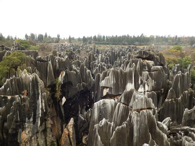 雲南省 世界遺産 石林 #10