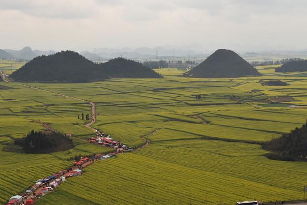 雲南省羅平 金鶏峰の菜の花畑#10