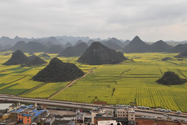 雲南省羅平 金鶏峰の菜の花畑#11