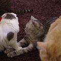 写真: 猫同士