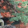 Photos: 灯篭と松