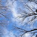 枯れ木に浮かび上がる営巣