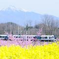 八ヶ岳と新府桃源郷