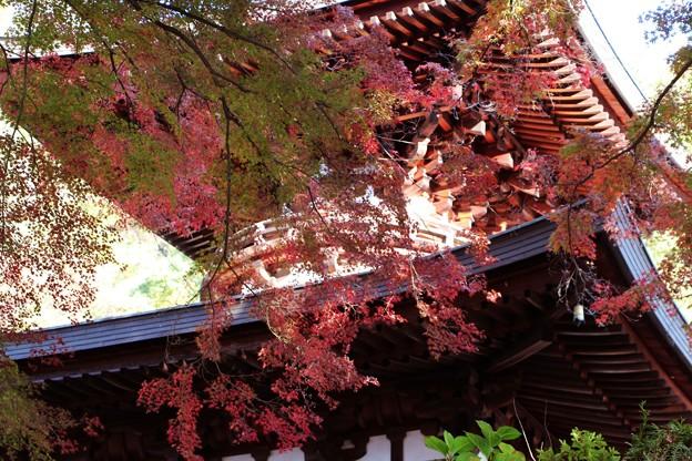 紅葉と多宝塔