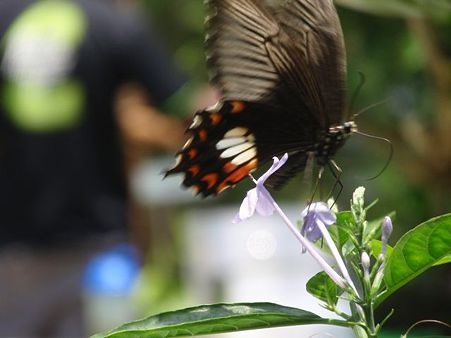 BUTTERFLY PARK 11