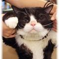 Photos: 猫招き