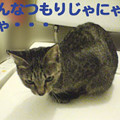 Photos: 2005/9/30【猫写真】濡れ衣にゃ!!