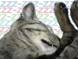 2005/9/13【猫写真】牙見えてるにゃ?!
