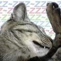 Photos: 2005/9/13【猫写真】牙見えてるにゃ?!