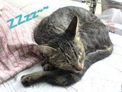 2005/9/20【猫写真】ZZzz~~