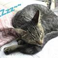 Photos: 2005/9/20【猫写真】ZZzz~~