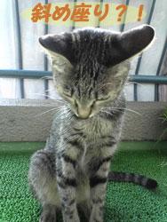2005/9/6【猫写真】斜め座りにゃ?!
