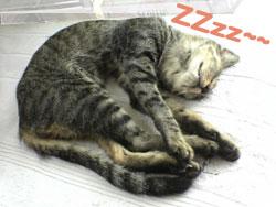 2005/9/19【猫写真】気持ちよくZZzz~~