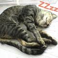 Photos: 2005/9/19【猫写真】気持ちよくZZzz~~