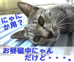 2005/9/15【猫写真】にゃにか用にゃ?