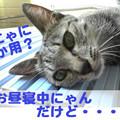Photos: 2005/9/15【猫写真】にゃにか用にゃ?