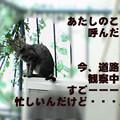 Photos: 051011-【猫写真】またまた、忙しいのにゃ!